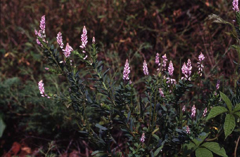 ecard 98501-paarse-bloemen