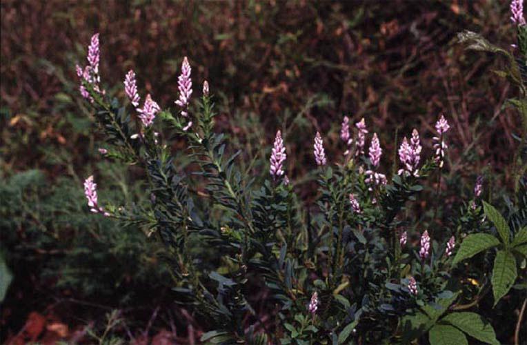 ecard 98501-paarse-bloemen2