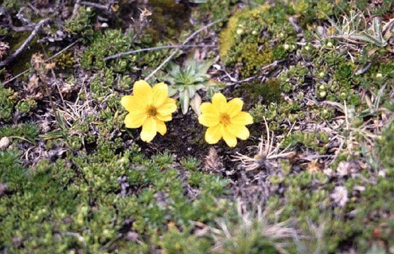 ecard 98503-gele-bloemen2