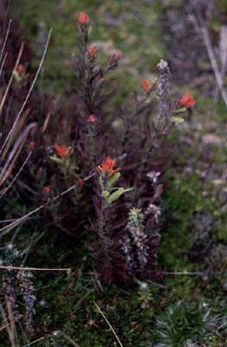 ecard 98506-rode-bloemen