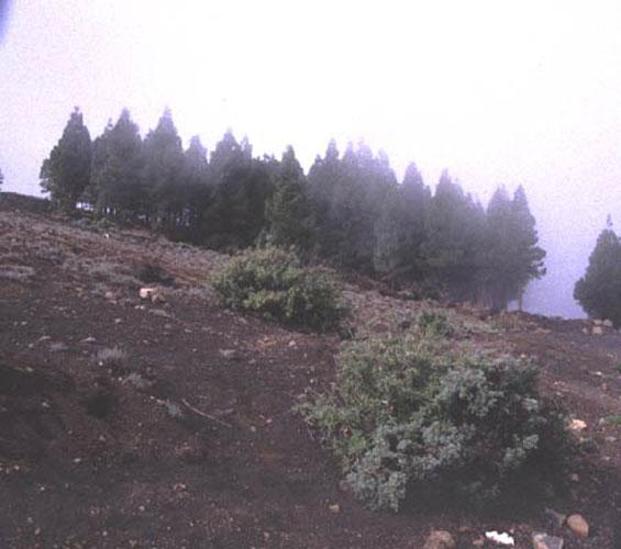 ecard 1021-bomen-in-wolk