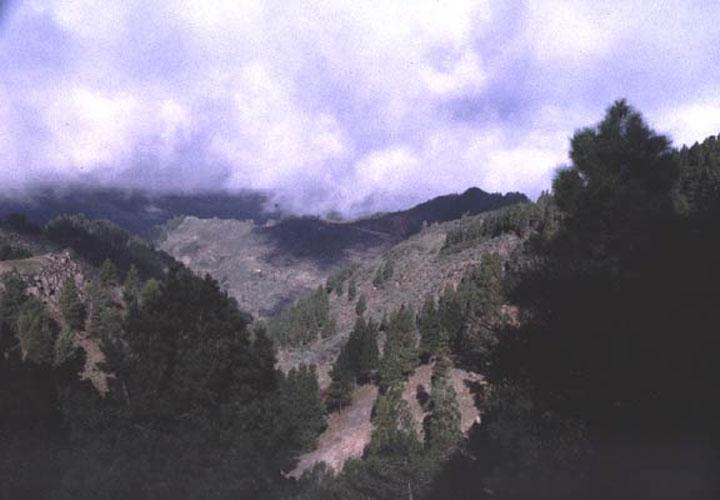 ecard 1022-bomen-in-wolk-2