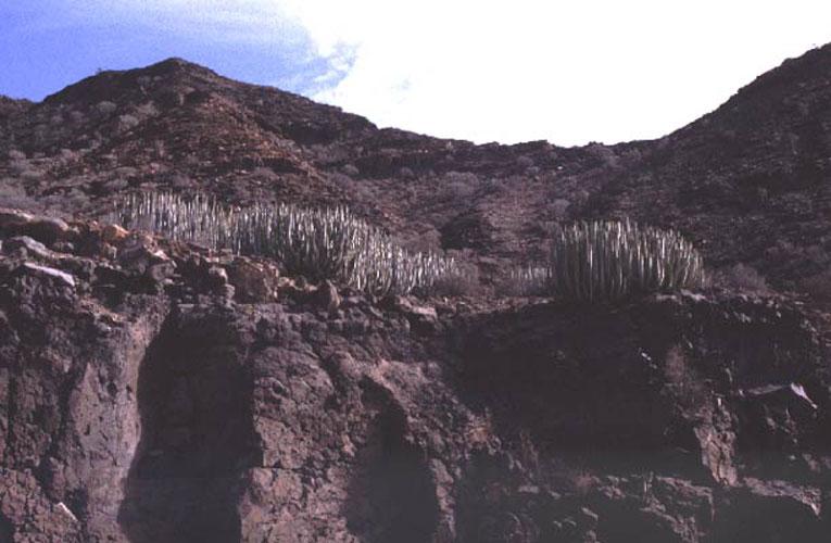 ecard 1027-cactussen