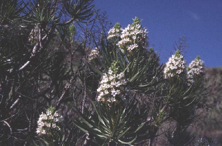 ecard 1040-witte-bloem-struik-2
