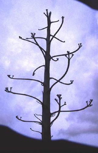 ecard 1044-cactusboom