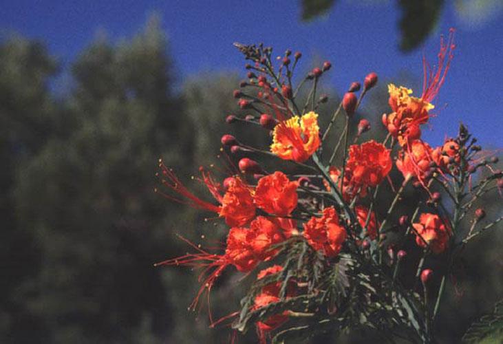 ecard 1051-rode-bloemen