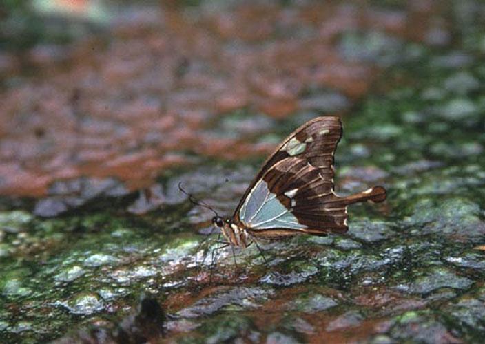 ecard 1539-vlinder