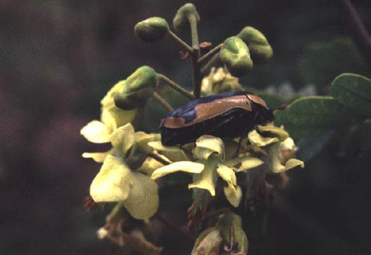ecard 1540-kever-in-bloem