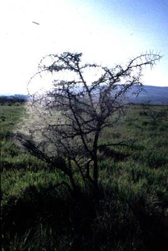 ecard 1542-struik-in-spinneweb