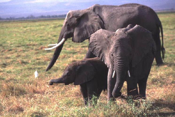 ecard 1557-olifant-met-jongen
