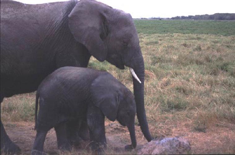 ecard 1559-olifant-met-jong-2