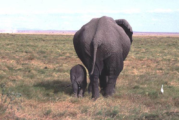ecard 1560-olifant-met-jong-3