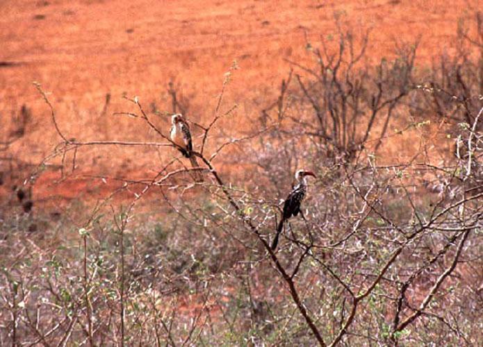 ecard 1631-neushoornvogels