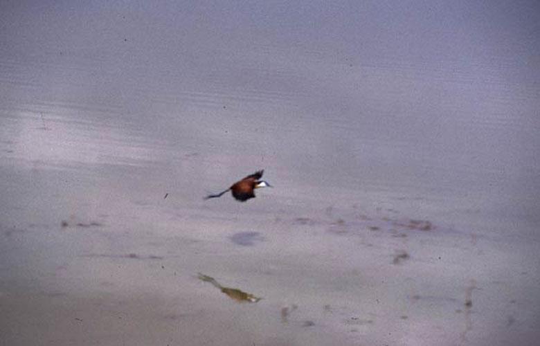 ecard 1636-vliegende-vogel