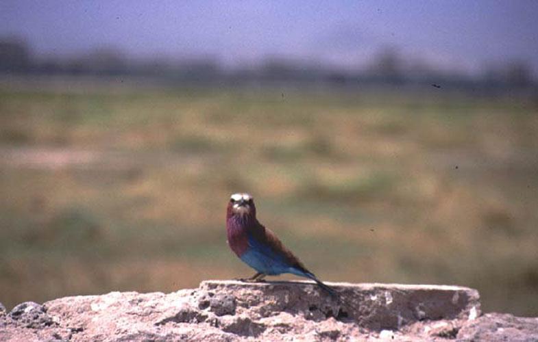 ecard 1641-kleurig-vogeltje