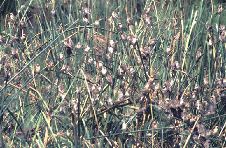 ecard 1643-struik-vol-vogels