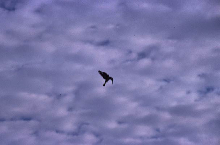 ecard 1659-biddende-ijsvogel