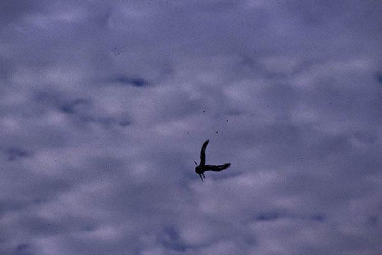 ecard 1659a-biddende-ijsvogel