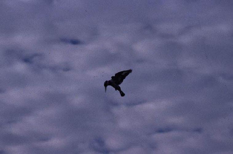 ecard 1659b-biddende-ijsvogel