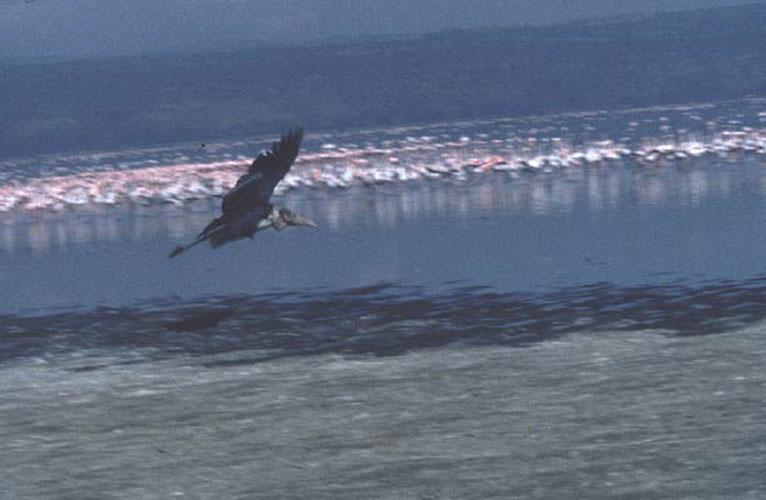ecard 1677-nimmerzaat-vliegend