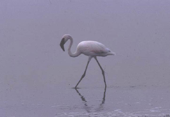 ecard 1692-flamingo-1