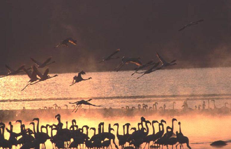 ecard 1696-flamingo-5