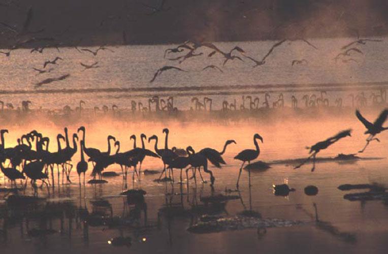 ecard 1697-flamingo-6