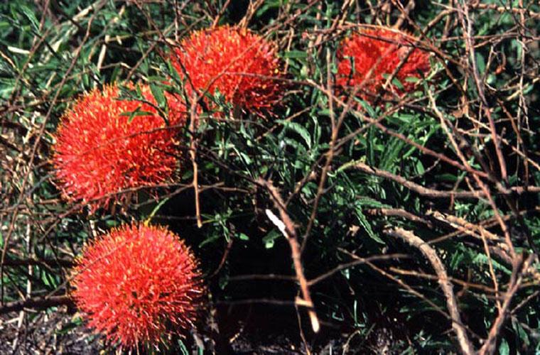 ecard 1700-rode-bloemen
