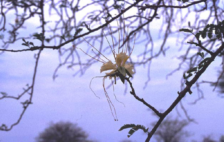ecard 1701-gele-bloem