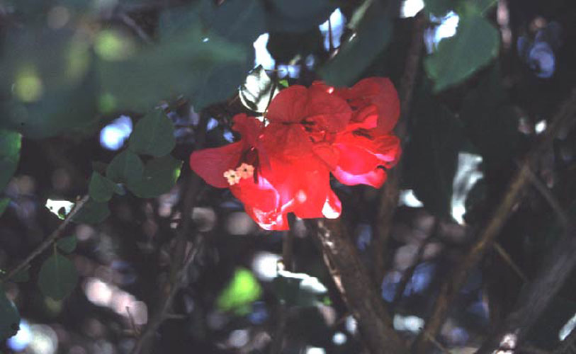 ecard 1702-rode-bloem