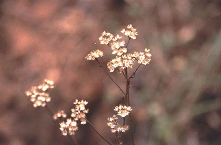 ecard 1710-witte-bloemen