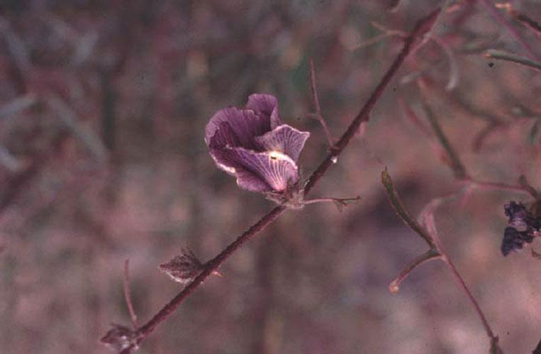 ecard 1716-paarse-bloem
