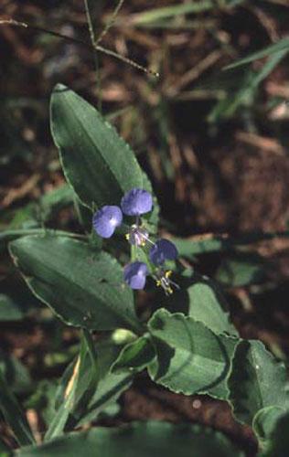 ecard 1718-blauwe-bloem