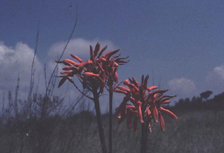 ecard 1719-oranje-bloemen