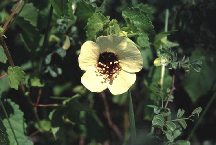 ecard 1721-gele-bloem