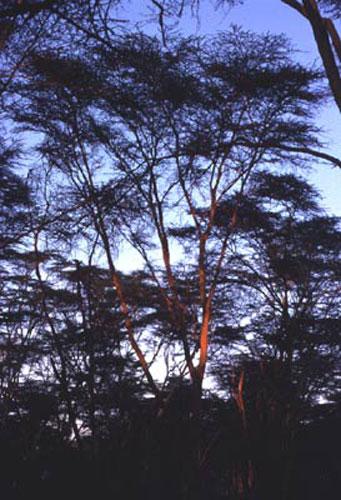 ecard 1723-licht-in-bos