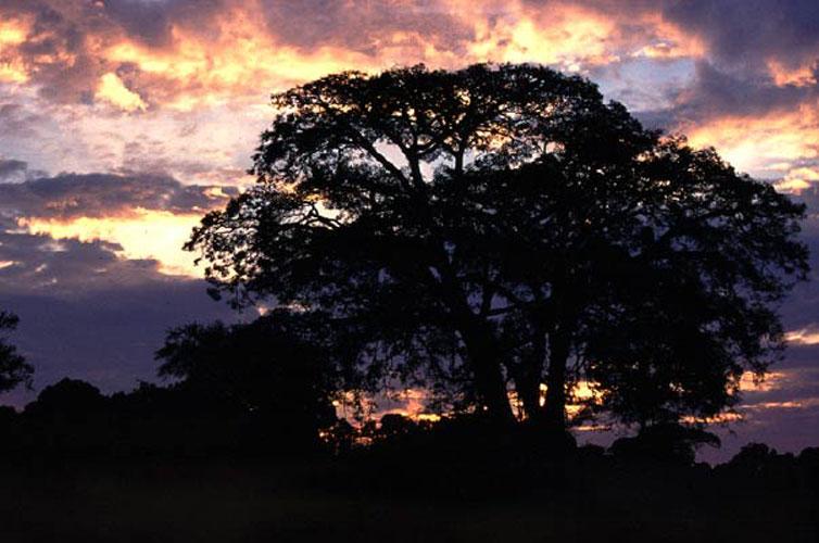 ecard 1729-boom-zonsopgang