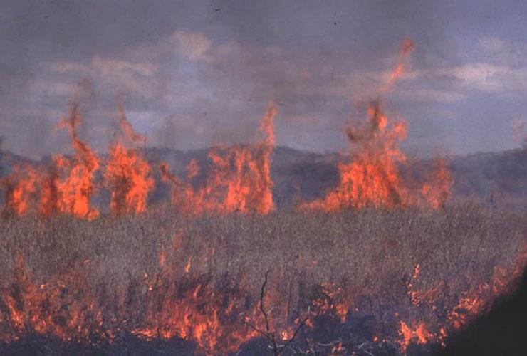 ecard 1738-vlammen