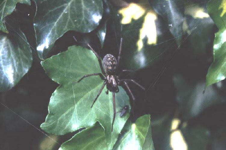 ecard 202-zwarte-spin