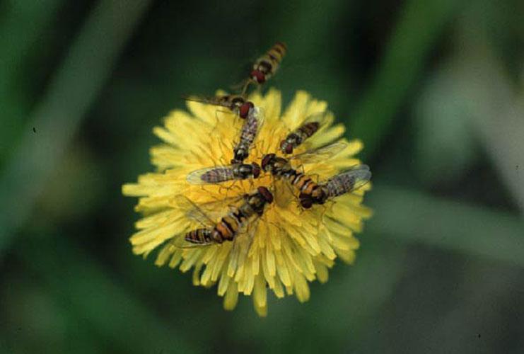 ecard 301-wespen-op-bloem