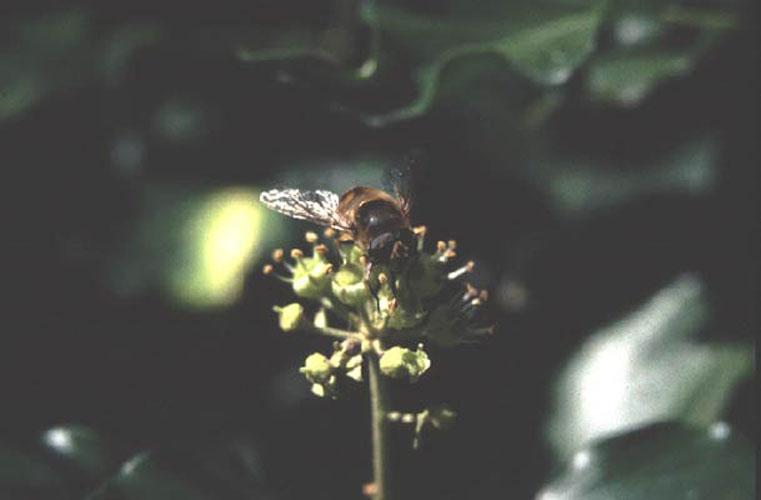 ecard 304-honingbij