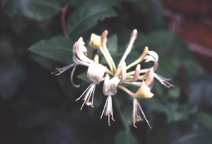 ecard 406-bloem-2