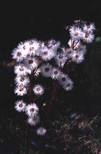 ecard 416-witte-bloemen