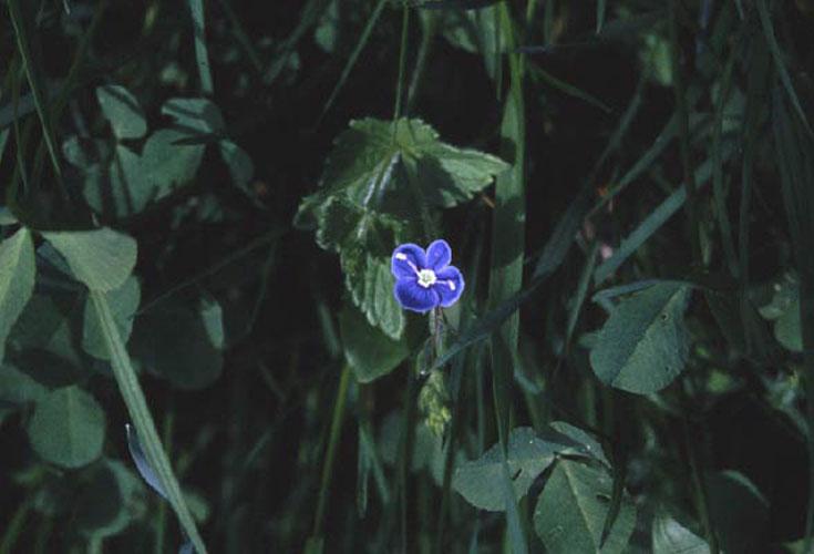 ecard 417-blauw-bloempje
