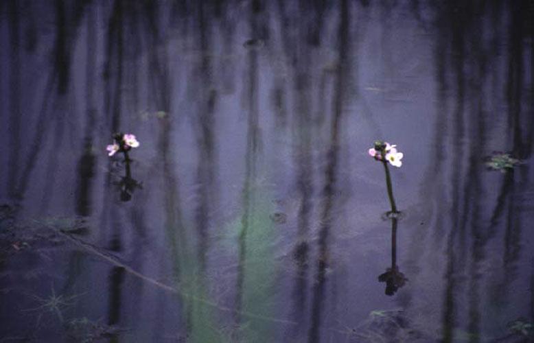 ecard 418-bloem-spiegel