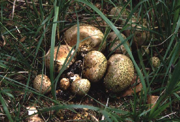 ecard 419-aardappelboleet