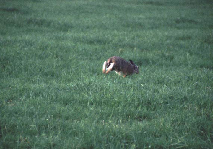 ecard 602-konijn-2