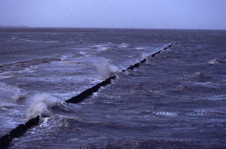 ecard 703-storm