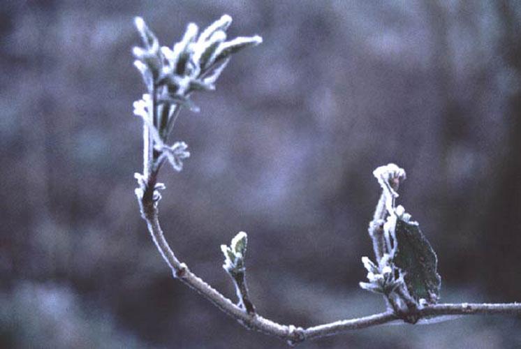 ecard 708-ijzel-3